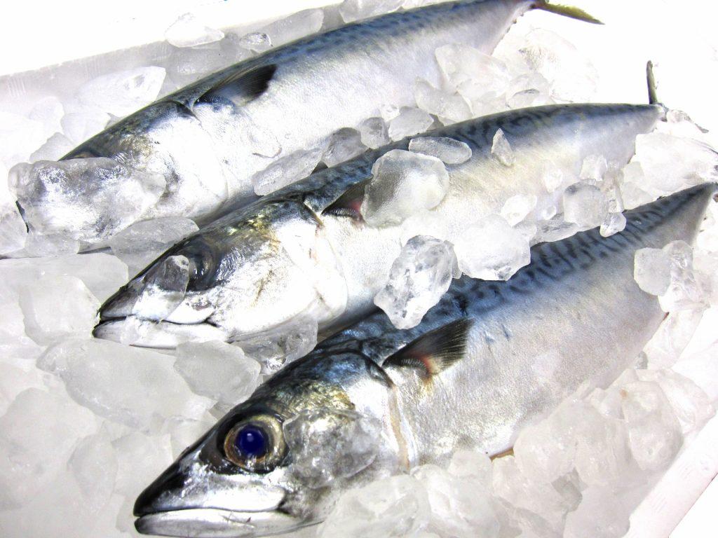 鮮魚の仕入れにIT活用